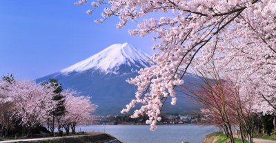 TOKYO – NÚI PHÚ SĨ – KYOTO – OSAKA , MÙA HOA ANH ĐÀO 2018