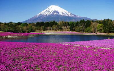 NHẬT BẢN (TOKYO - FUJI - NAGOYA - KYOTO - OSAKA)